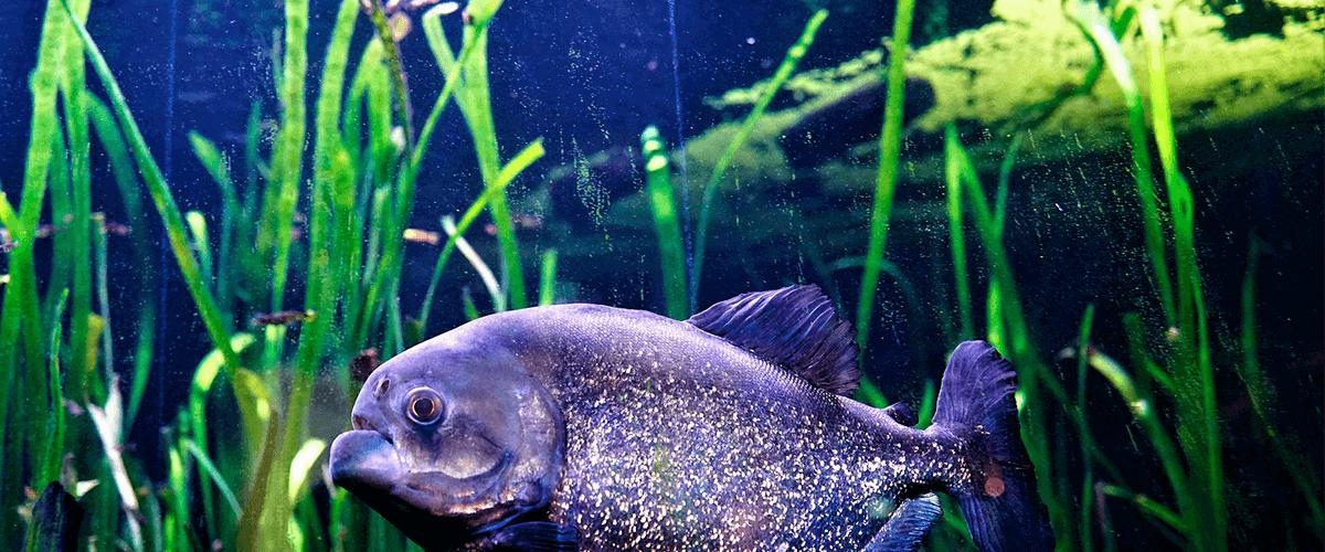 Vista de un pez rodeado de algas en un acuario.