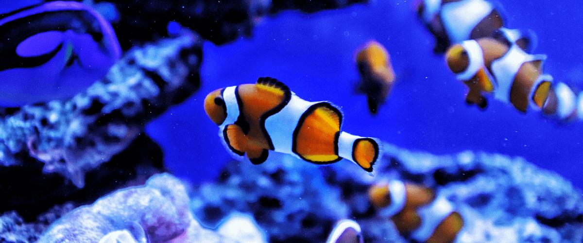 Vista de un pez que nada de lado: ¿Por qué?