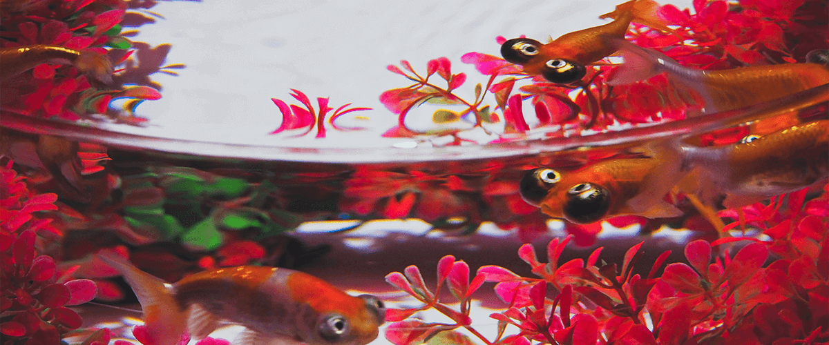 pecera-kit-completo-con-peces