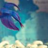 Los acuarios pequeños y los peces que pueden vivir en él