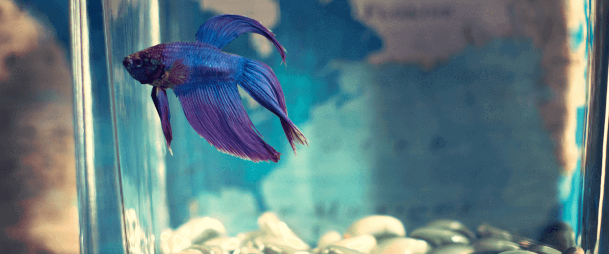 peces-acuario-pequeño